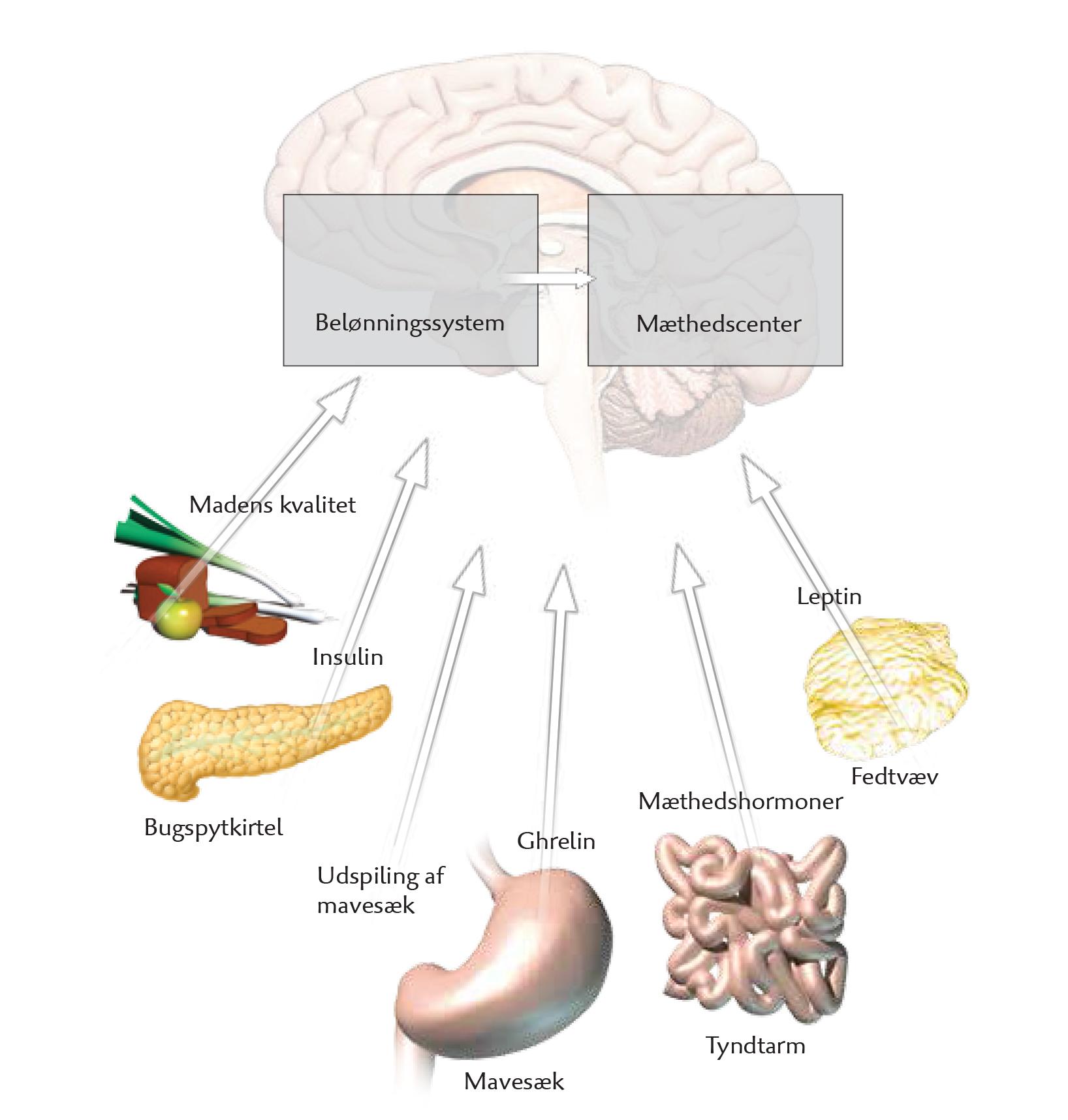 kost og sundhed biologi