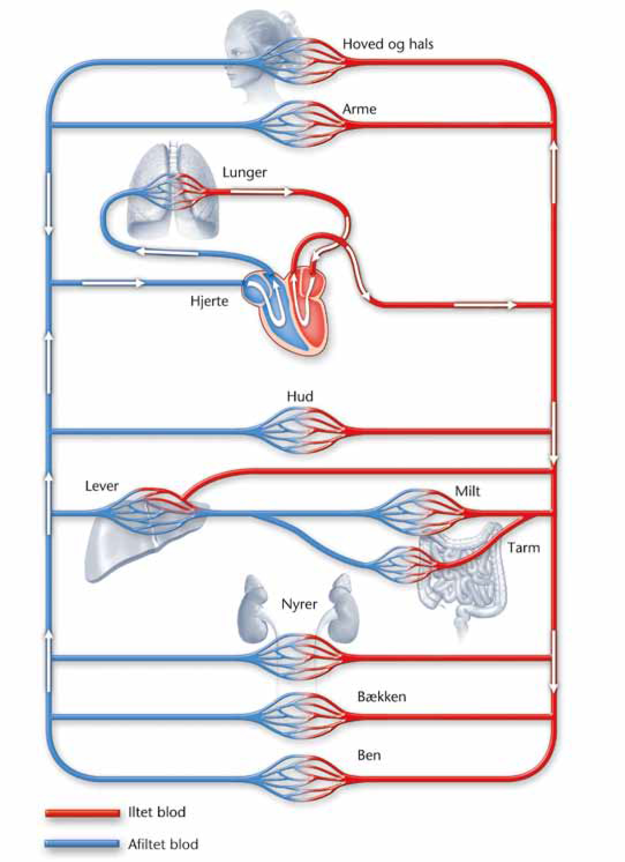 biologi i tiden